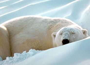 Téli hosszú pihenés
