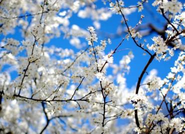 Tavaszi hétköznapi álom min. 2 éj