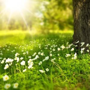 tavaszi kép3